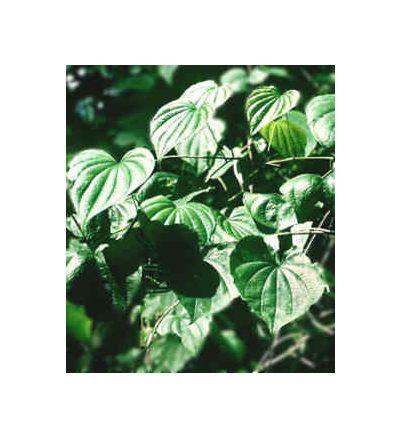 Wild Yam Root, tincture - 4oz (118.3ml)