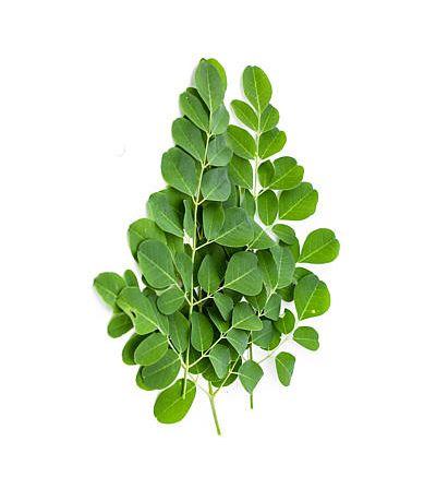 Moringa Tea 85 gm