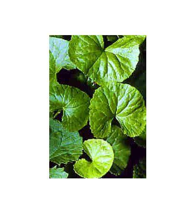 Gotu Kola Leaf, tincture - 4oz (118.3ml)