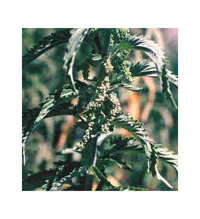 Nettles Leaf, tincture - 4oz (118.3ml)