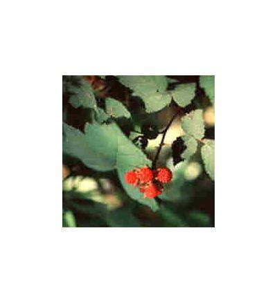 Red Raspberry, tincture - 4oz (118.3ml)
