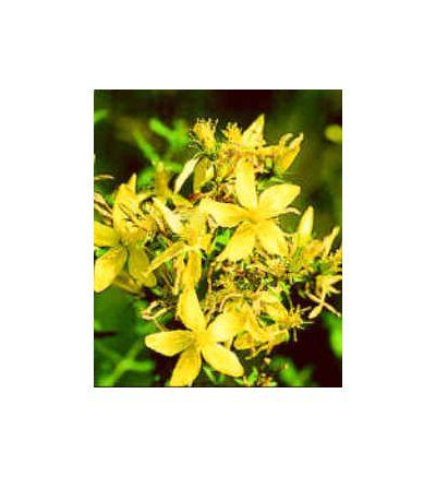 St. John's Wort Flowering Tips, tincture - 4oz (118.3ml)
